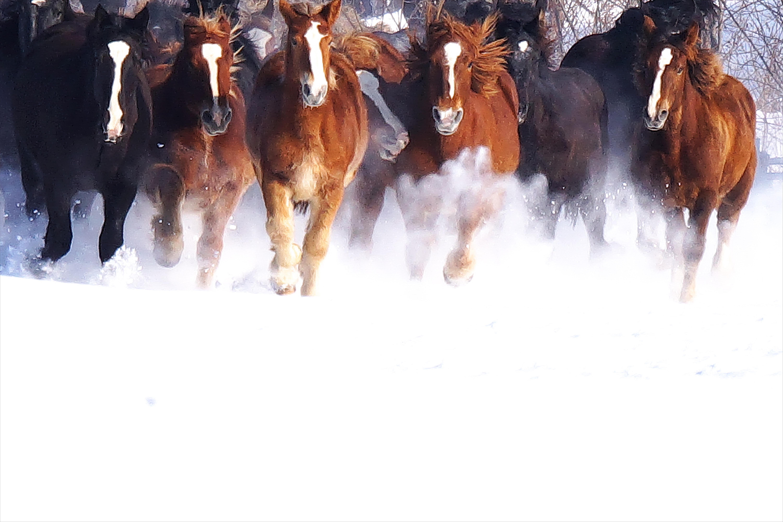 雪の牧場と馬