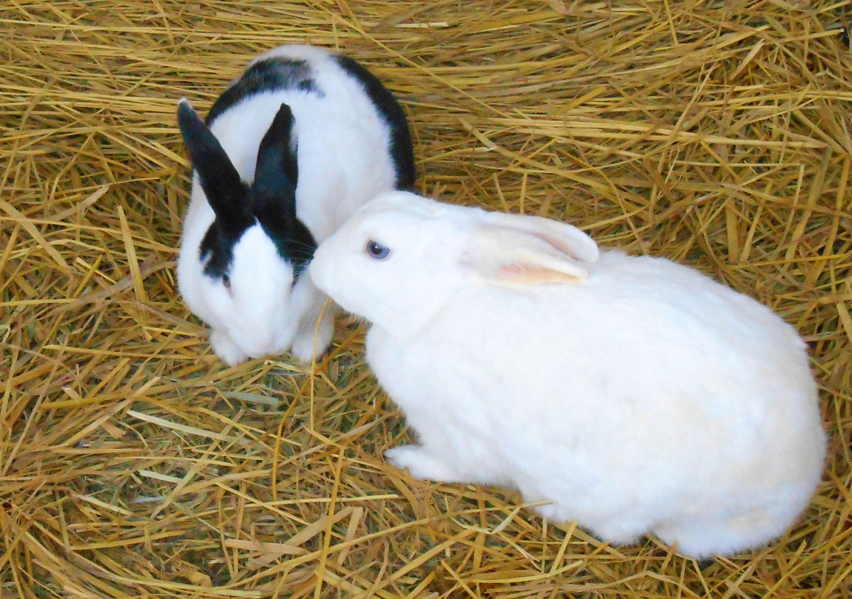 草食系ウサギ