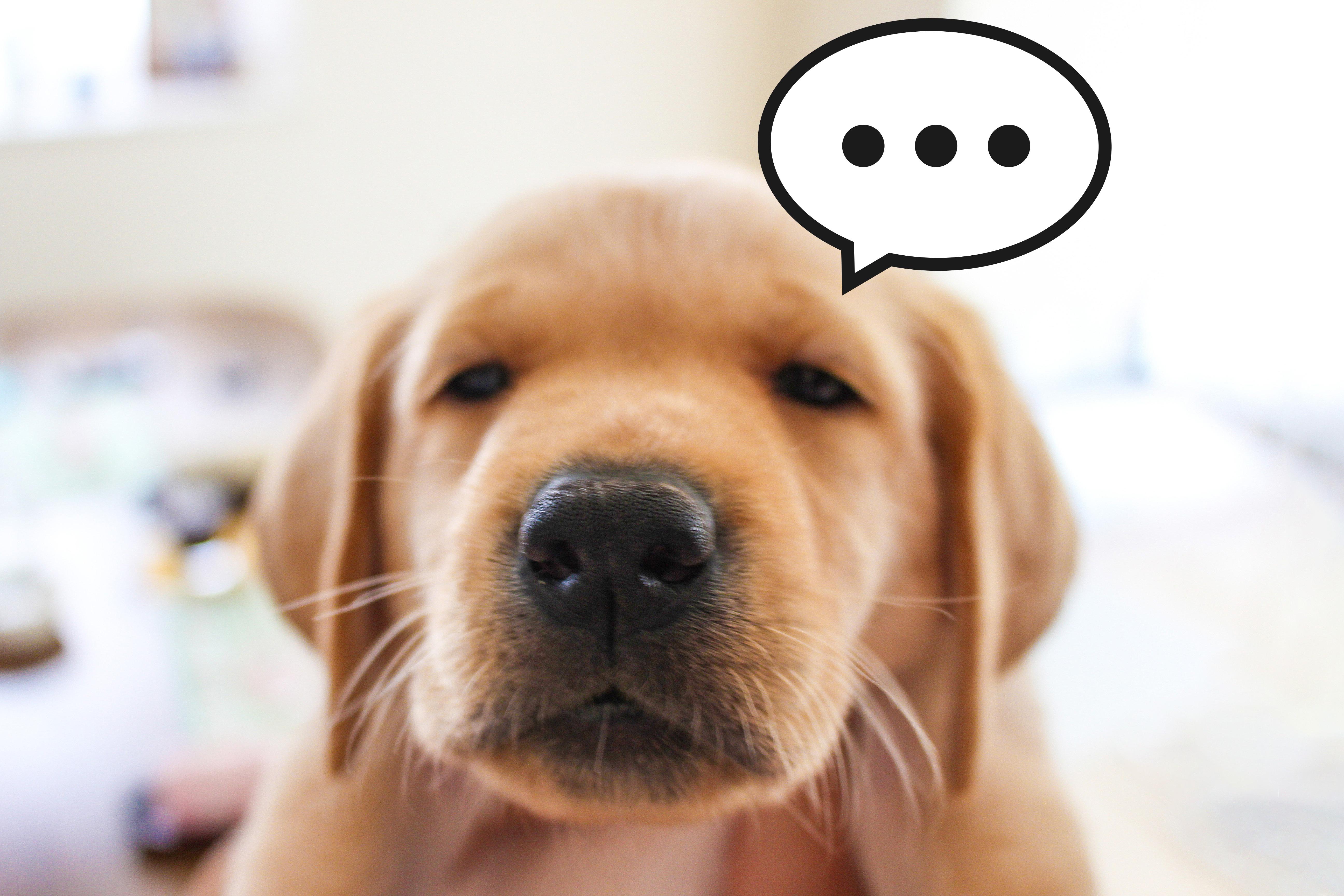 悩み不満な犬