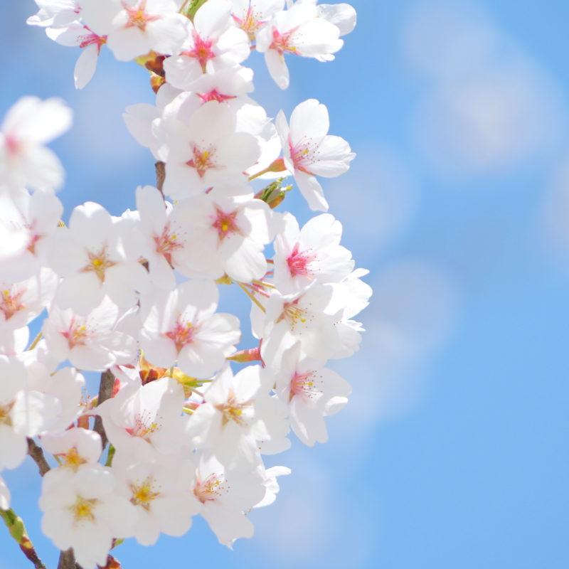 春は再婚活スタートの季節!?のイメージ