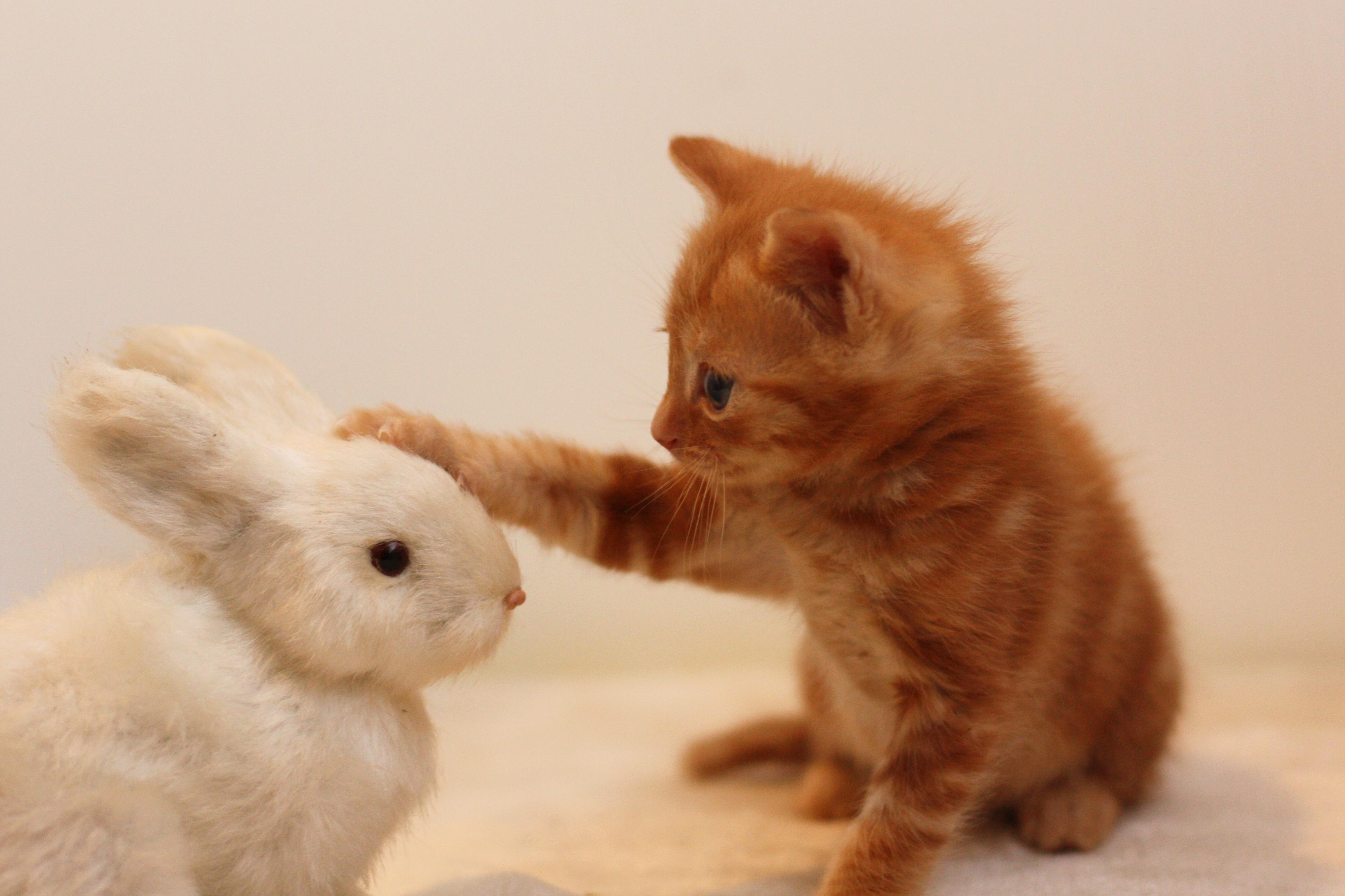 ネコとウサギ